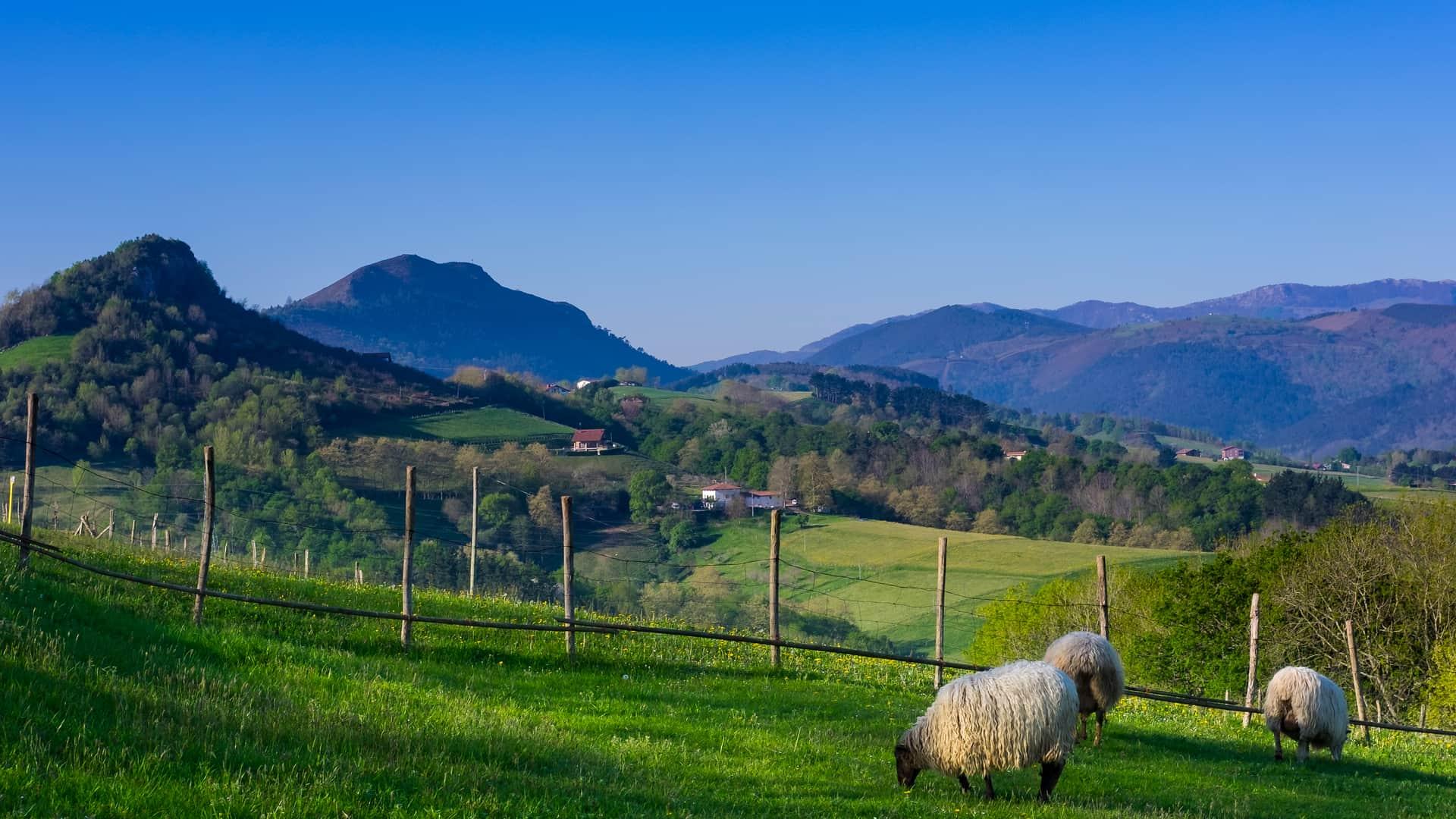 Euskaltel en Hernani : tienda, horarios y dirección