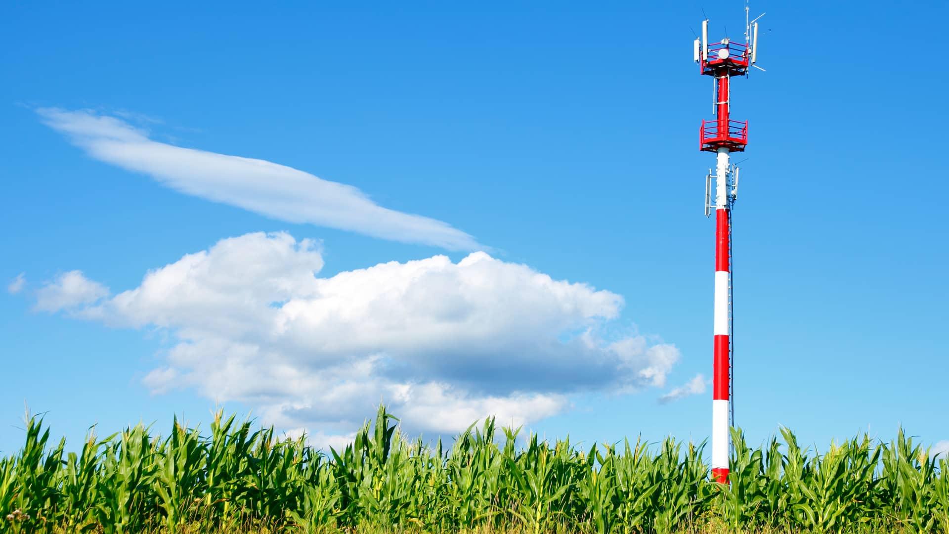 Antena de cobertua en mitad de campo de maiz simboliza cobertura virgin telco