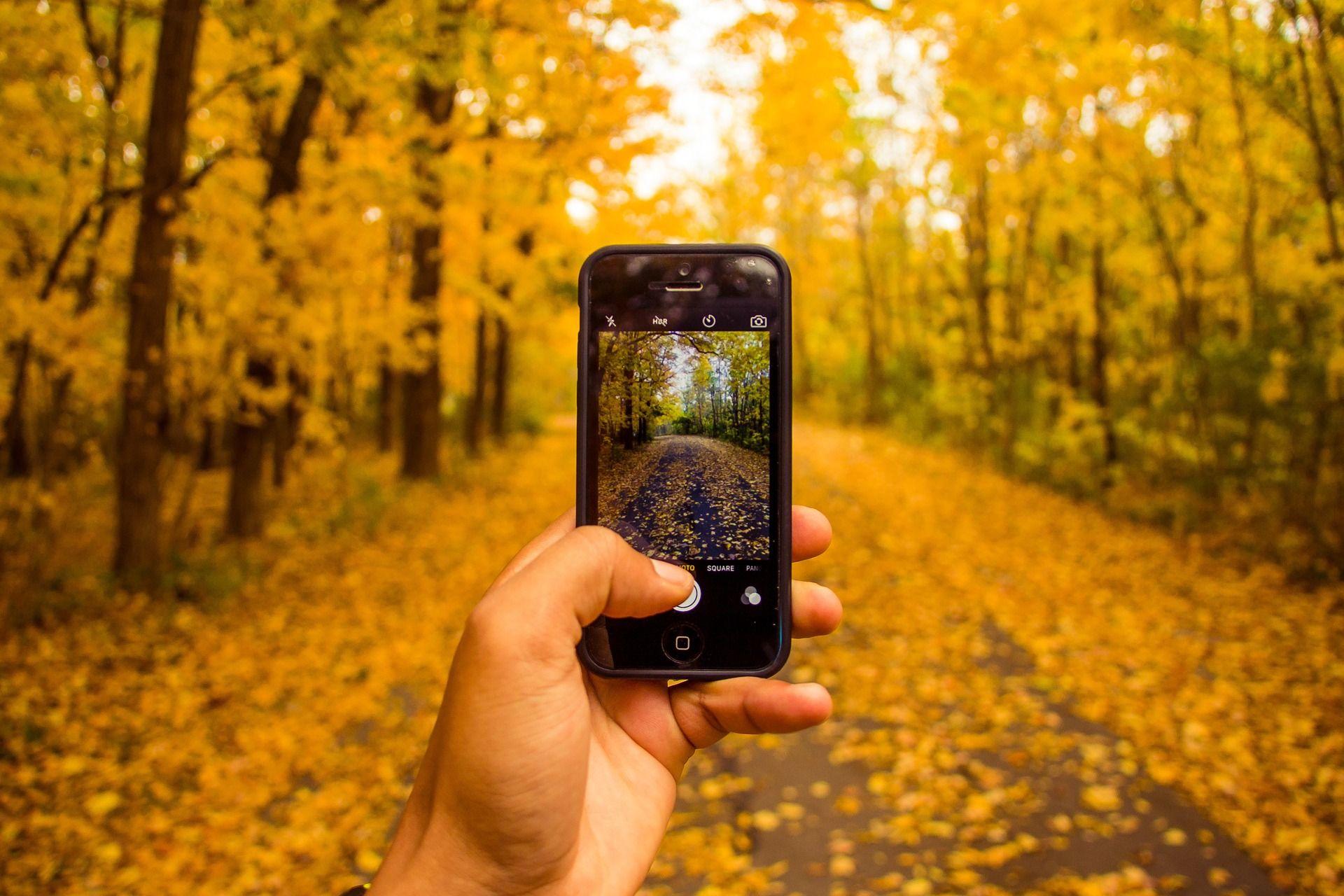 Haciendo una foto al otoño con un smartphone