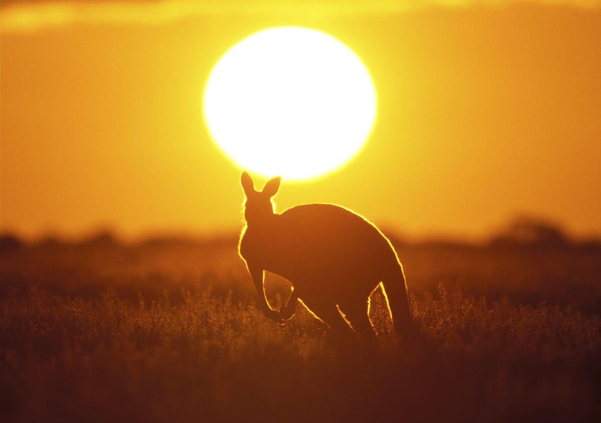 Tarifa canguro de Orange