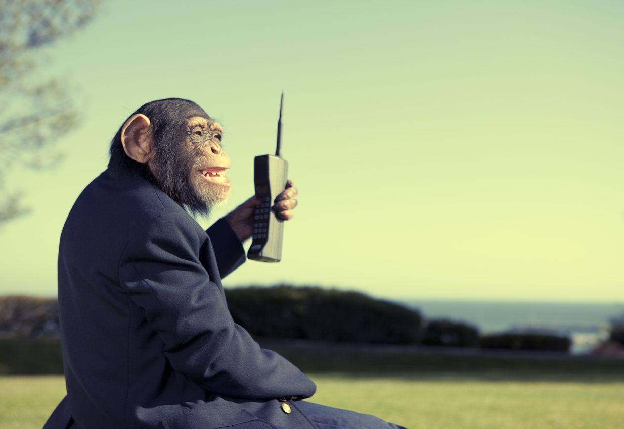 un mono llama con cobertura movistar
