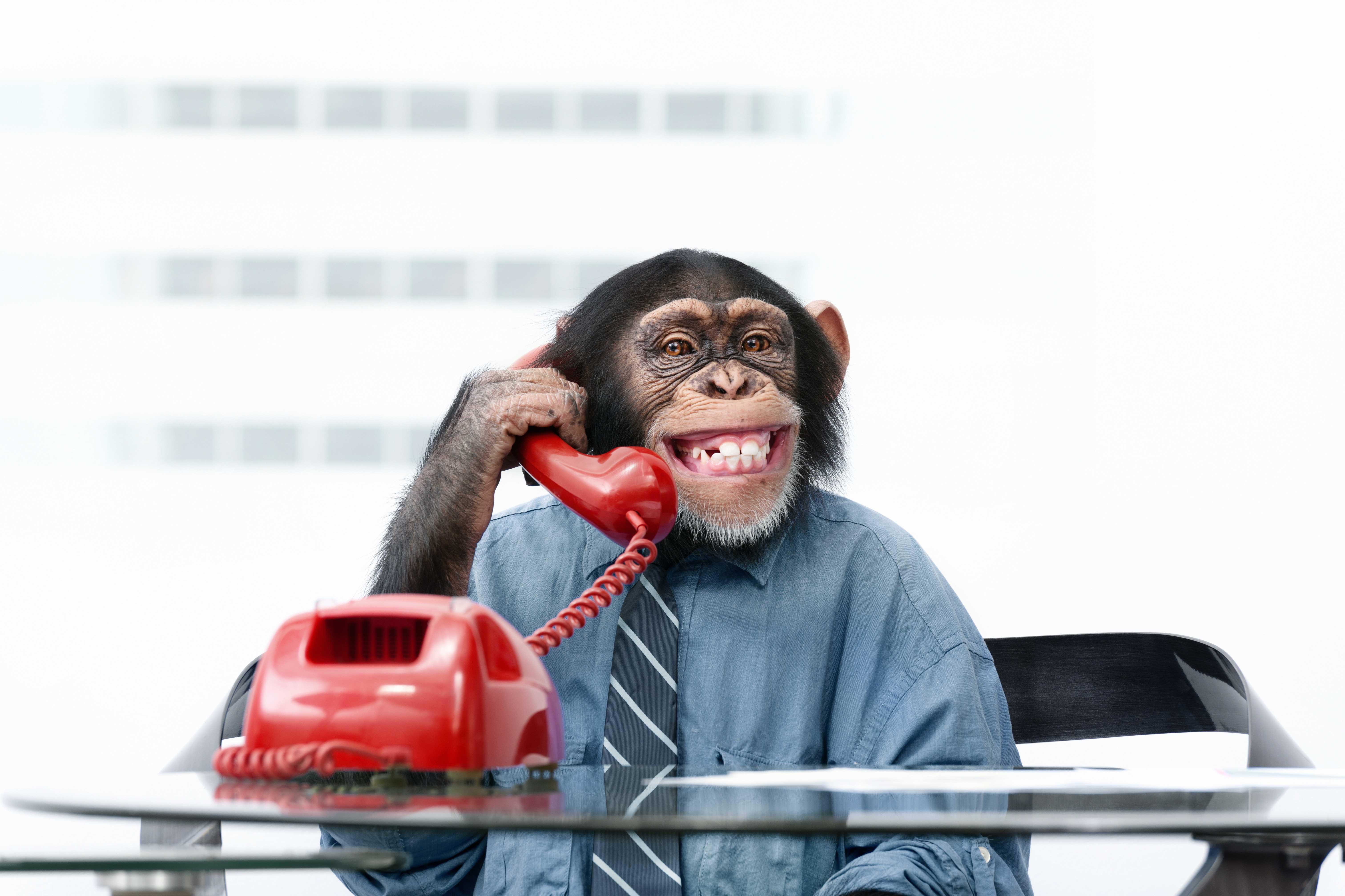 Mono llama por teléfono buscando tarifas de fijo sin cuota de linea