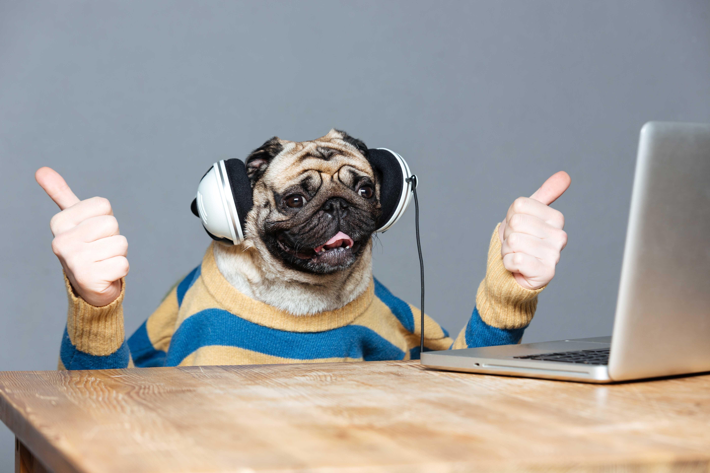 Perro celebra los trucos para portabilidad