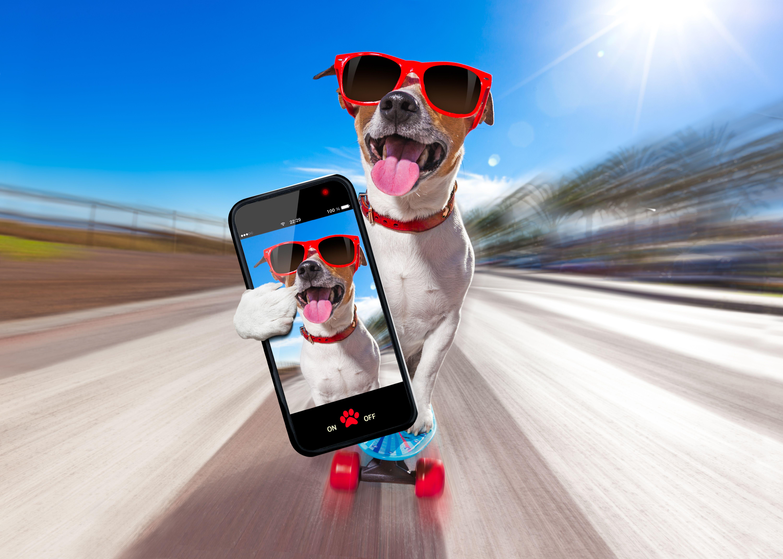 perro muestra en su móvil las ventajas de fibra y móvil